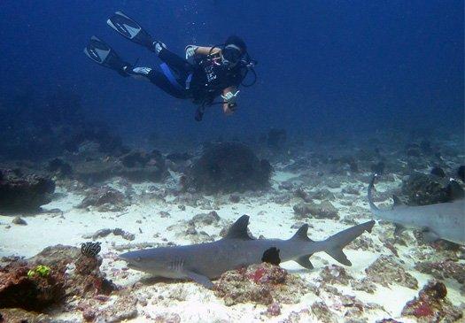 Tanjung Sari one of the best dive sites in Padang Bay Bali