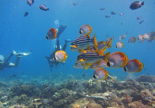The dive site Bias Tugal Padang Bay in Bali