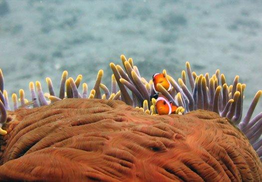 The turtle neck, beautiful dive site in Padang Bay Bali