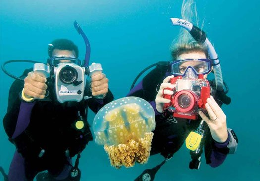 Learn to use your underwater camera with the digital underwater photography course