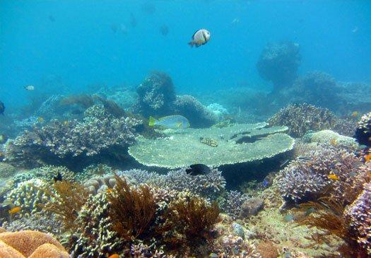 Garden Eel, beautiful dive site at Menjangan Island, Bali