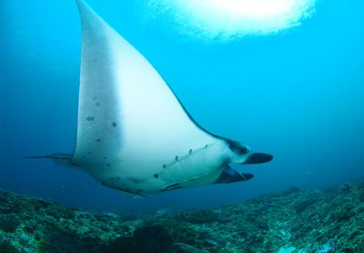 Dive site manta point nusa penida bali