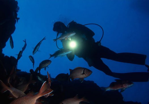 Discover the reefs at night with the PADI night diver course in Bali