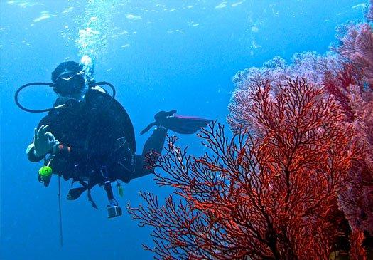 Impressive wall dives at POS II Ranger Station dive site