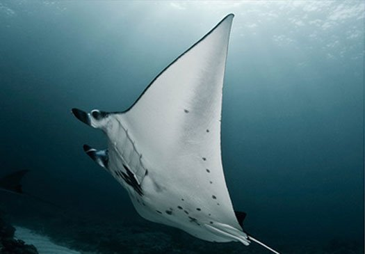 Competitive Bali diving prices for quality dive trips