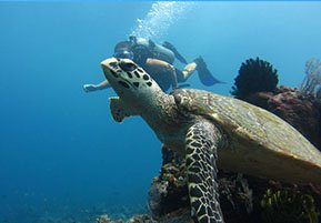 Dive Amed and discover great coral reef diving with a wide variety of marine life