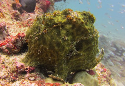 Puri Jepun Bali one of the nice dive sites in Padang Bay