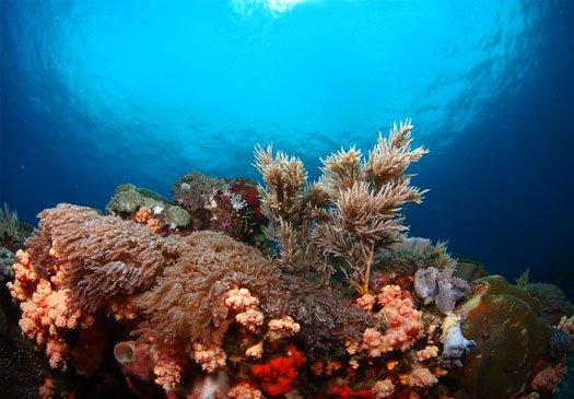 Dive site SD Nusa Penida Bali