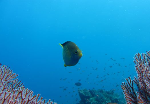 Dive Site Amed Wall in Amed Bali