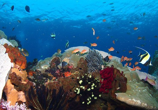Kapal Budak: rich, colourful walls, clear waters and an abundance of reef life.