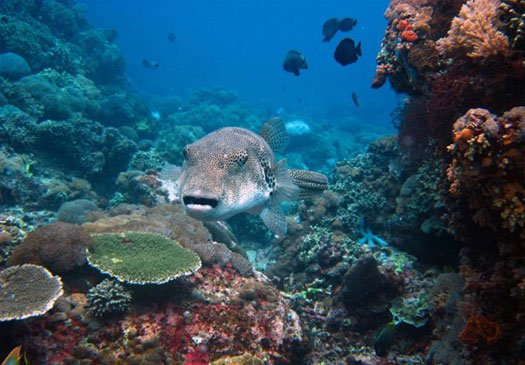Beautiful challenging divesites on Candi Dasa Bali