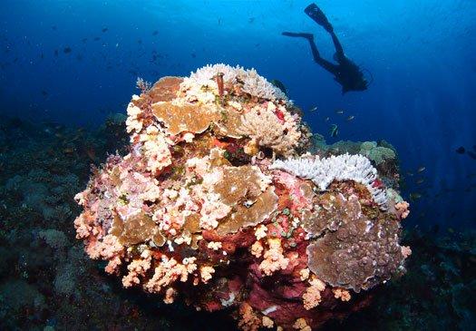 Duikstek Crystal Bay Nusa Penida Bali