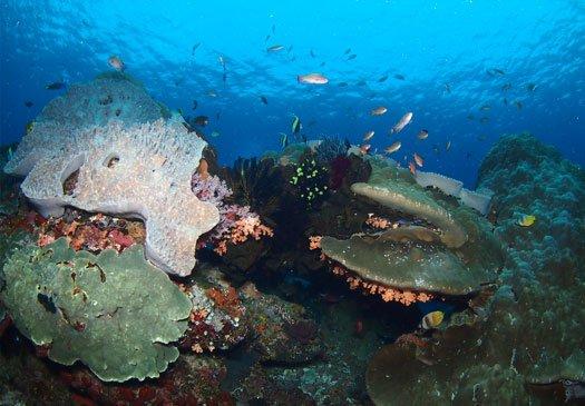 Dive site Jack Point Nusa Lembongan Bali