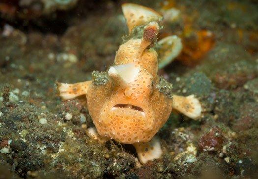 Geweldige Muck Dive Site bij Padang Bay, Bali