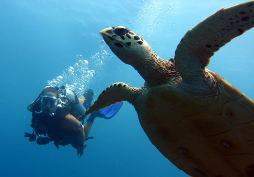 Take your PADI open water course in Bali with Joe's Gone Diving