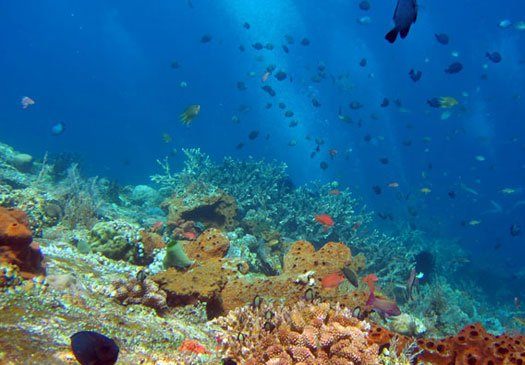 Dive site Sanur Channel Sanur Bali