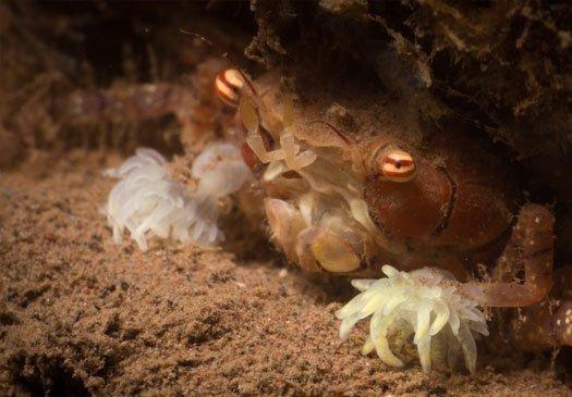 Beautiful Muck Dive Site at Gilimanuk