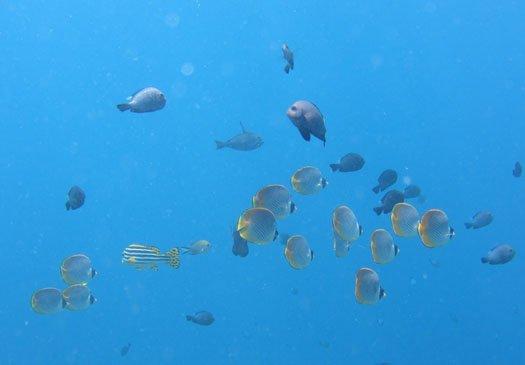 Jeladi Willis, hier gibt es einige vitale Korallen und Interresante Meeresbewohner