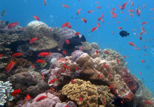 Great wall diving in North-West Bali