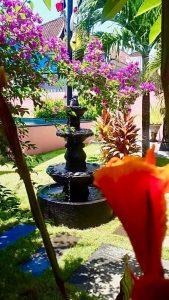 dive school garden flowers